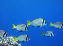 fiskstim Royaltyfri Bild