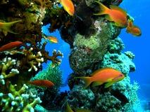 fiskstim Royaltyfri Fotografi