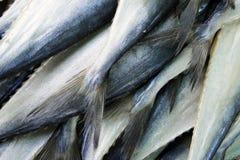 fisksvanar Royaltyfria Bilder