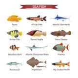 Fiskvektoruppsättning i plan stildesign Samling för hav-, havs- och flodfisksymboler Arkivfoto
