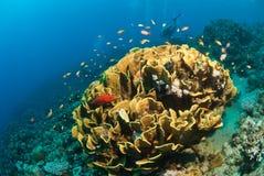 fiskvirvel Royaltyfri Bild