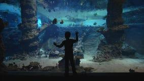 Fiskzooliv, liten pojke som betraktar fisken i stor undervattens- behållare med den marin- naturen i klart vatten arkivfilmer