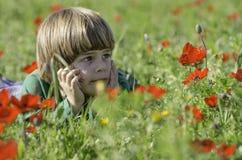 Fissando ad un campo dei Anemones Immagini Stock Libere da Diritti
