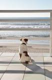 Fissare fuori al mare Fotografia Stock Libera da Diritti