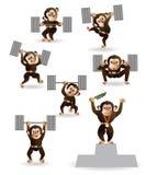 Fissi il culturismo di amore della scimmia Fotografie Stock Libere da Diritti