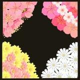 Fissi l'angolo con il fiore di ciliegia di sakura, la camomilla, loto Vettore Fotografia Stock Libera da Diritti