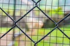 Fissi la gabbia allo zoo esotico eccezionale in Tailandia Fotografia Stock Libera da Diritti
