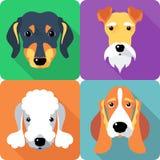 Fissi la progettazione piana dell'icona dei cani Fotografie Stock