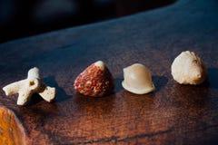 Fissi le conchiglie e la bugia del corallo sulla tavola di legno scura Conchiglie e corallo della raccolta Immagini Stock Libere da Diritti