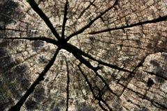 Fissuré du bois Images stock
