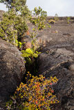 Fissure in Hawaii Volcanoes National Park Stock Images