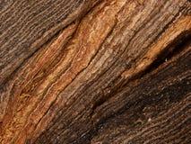 Fissure le chêne d'arbre d'écorce Photo libre de droits