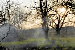 Fissures d'écorce de fruit en brouillard photographie stock libre de droits