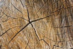 Fissures en bois photo libre de droits