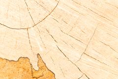 Fissures en bois circulaire photos libres de droits