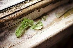 Fissures en verre abandonnées photographie stock libre de droits