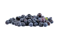 Fistful of blueberry Stock Image