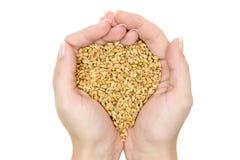 Fistful dei granuli del frumento Fotografia Stock Libera da Diritti