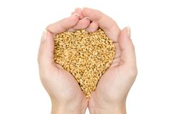 Fistful of Wheat Grains Royalty Free Stock Photo