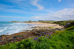 Fistral beach Newquay North Cornwall uk with bluebells and waves in spring best surfing beach in the UK Stock Images