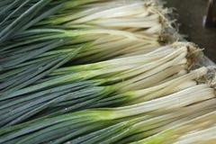Fistulare Zwiebel auf dem Gebiet, Liliaceae Lizenzfreie Stockfotografie