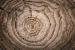 Fiszorek drzewo powalać - sekcję bagażnik z rocznymi pierścionkami S zdjęcie royalty free