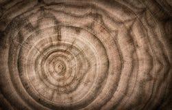 Fiszorek drzewo powalać - sekcję bagażnik z rocznymi pierścionkami S zdjęcia royalty free