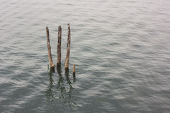 Fiszorek w rzece Zdjęcia Stock