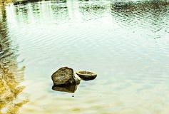 Fiszorek w wodzie w wiośnie Zdjęcia Stock