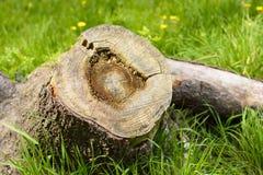 Fiszorek w zielonej trawie po środku lasu Zdjęcia Stock
