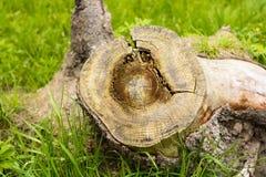 Fiszorek w zielonej trawie po środku lasu Zdjęcie Royalty Free