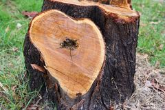 fiszorka drzewo Obrazy Stock