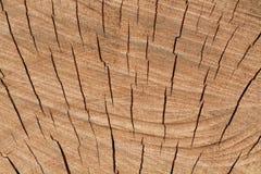 fiszorka drzewo Fotografia Stock