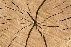 fiszorka drzewo Obraz Royalty Free