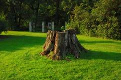 fiszorka drzewo zdjęcie royalty free