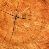 fiszorka tekstury drzewo Zdjęcie Stock
