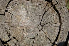 fiszorka weathersa drzewo Fotografia Stock