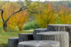 Fiszorki w parku Obrazy Royalty Free