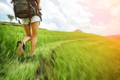 Fit and beautiful woman`s legs with backpack walking across green field. Intentional motion blur and sun glare Royalty Free Stock Photography