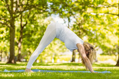 Fit blonde doing yoga in the park Royalty Free Stock Image