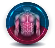 Fit body muscles. Torso and arms, beautiful colorful icon royalty free illustration