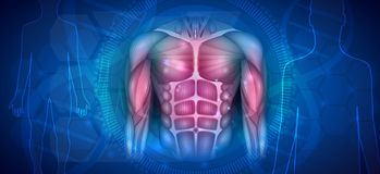 Fit body scientific background. Muscles of the human body, abdomen, chest and arms, beautiful colorful illustration on an abstract blue background royalty free illustration