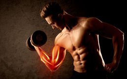 Fit bodybuilder lifting weight with red muscle concept. On background stock photos