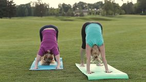 Fit ladies standing in donward facing dog pose stock video footage