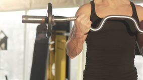 Fit male athlete lifting curl bar with strong muscular arms, bodybuilder workout. Stock footage stock footage