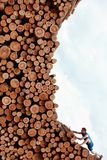 Fit man climbing the  pile of cut wooden logs Royalty Free Stock Photo