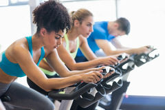 Fit people in a spin class. At the gym royalty free stock images