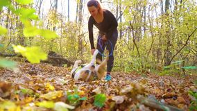 American Staffordshire terrier lying on back after canicrossing with owner. Fit redhead girl in sportswear with bungee cord on waist playing with dog American stock footage