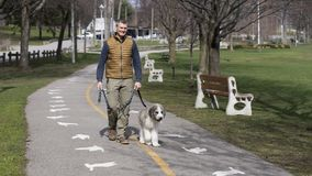 Fit Senior Man walking a Saint Bernard mix puppy stock photos