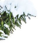 Fit tre in snow royalty free stock images